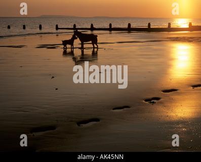 Zwei Hunde am Strand bei Sonnenuntergang Silhouette gegen einen geringen Sonne reflektiert nassen Sand mit Fußspuren - Stockfoto