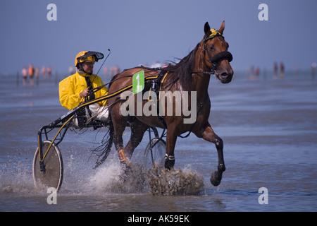 pferderennen bad harzburg 2019