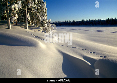 Winter in Lappland - Stockfoto