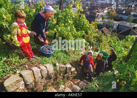 Familie, die Ernte der Trauben in der Nähe von Esslingen in Deutschland - Stockfoto