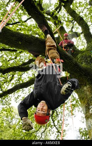 Junger Mann aufhängen Seite nach unten auf einen Baum klettern Kurs bei Brechfa Carmarthenshire Wales UK GB unter - Stockfoto