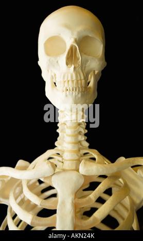 Menschlicher Schädel-Struktur Stockfoto, Bild: 52538958 - Alamy