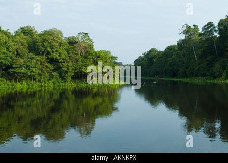 Mamirauá Naturreservat, Amazonas, Brasilien - Stockfoto