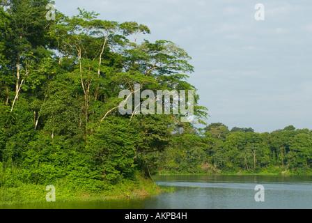 Mamirauá Naturreservat, Amazonas Brasilien - Stockfoto