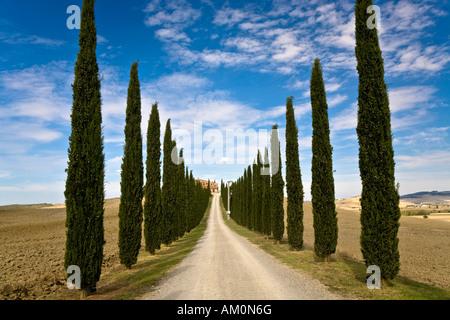 Allee der Zypressen (Cupressus) führt zu einem Landhaus im Tal Val d ' Orcia Crete Toskana Italien - Stockfoto