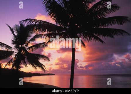 Palmen am Strand auf der Insel Rarotonga auf den Cook Inseln - Stockfoto
