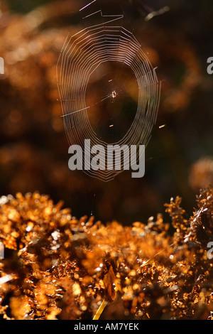 Spinnennetz im Gegenlicht - Stockfoto