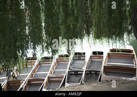 Punt Boote unter Zweigen der Weide Baum Punting, Fluss Cam, Cambridge, England - Stockfoto