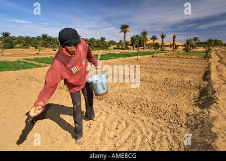 Ein Berber Mann Saat aus einem Eimer in den Plantagen von Dorf Merzouga im östlichen Marokko. - Stockfoto