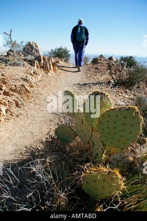 Ein Wanderer auf dem Weg in die Wüste führt dieser Weg an die Spitze der Wassen Peak in der Nähe von Tucson im Süden - Stockfoto