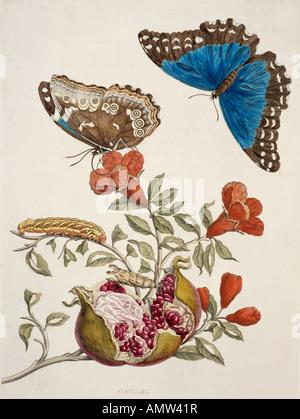 Insekten von Surinam - Stockfoto
