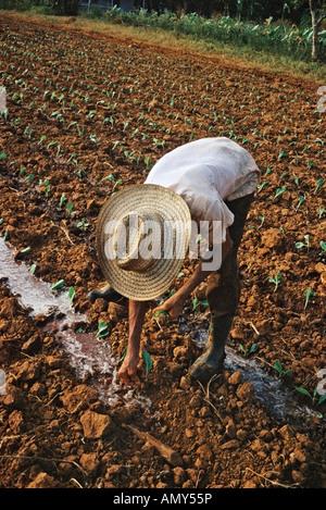Landarbeiter, die Pflanzen bewässert Pflanzen in ländlichen La Habana Provinz Kuba - Stockfoto