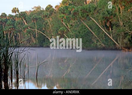Blick auf den Fluss Tomoka in Florida USA - Stockfoto