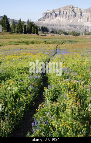 Weg durch ein Feld von Wildblumen im Grand Teton National Park Bergen, Wyoming, USA - Stockfoto