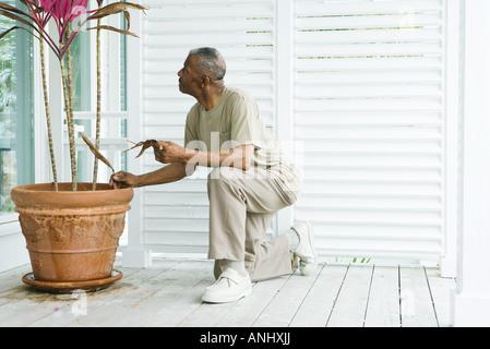 Mann kniet neben Topfpflanze, getrocknete Blätter in der hand halten, Seitenansicht - Stockfoto