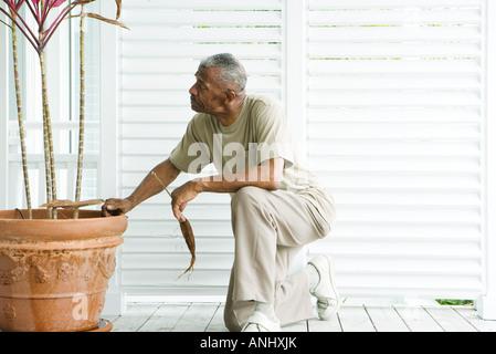 Mann kniet neben Topfpflanze, halten getrocknete Blätter in Händen - Stockfoto