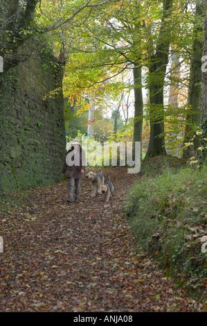 Dame ein Airedale und Welsh Terrier einen Waldweg entlang - Stockfoto