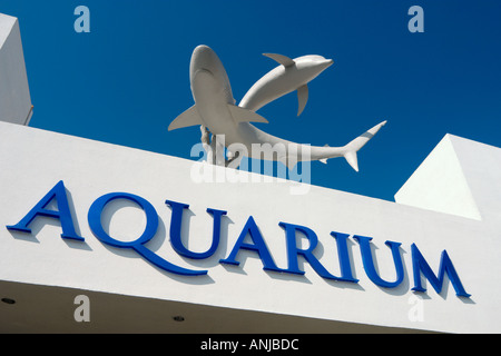 Das Aquarium in La Isla Shopping Village, Cancun, Halbinsel Yucatan, Mexiko - Stockfoto