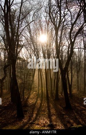 Die Morgensonne strömt durch frühen Morgennebel in Madison, Connecticut, USA - Stockfoto