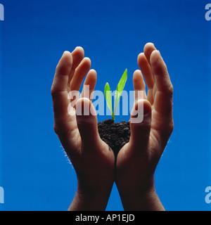 Landwirtschaft - Hände halten einen Getreide Mais Sämling wächst in fruchtbaren schwarzen Boden, Studio. - Stockfoto