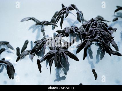 Frosch entwicklung stockfoto bild 51768208 alamy - Frosch auf englisch ...