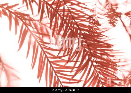 Abstrakt Nahaufnahme von Herbstlaub auf weißem Hintergrund - Stockfoto