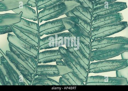 Eine abstrakte Foto-Illustration Nahaufnahme von grünen Blatt Laub - Stockfoto