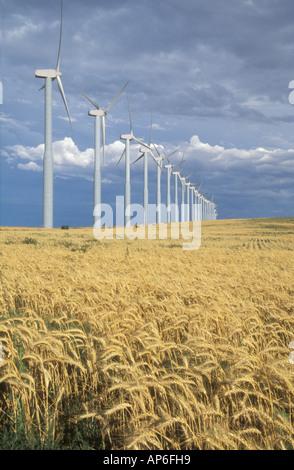 Strom erzeugende Windmühlen sind am Rand von einem Weizenfeld aufgereiht. Walla Walla County, WA. USA - Stockfoto