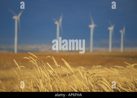 Strom erzeugende Windmühlen sind hinter dem Rand des ein Weizenfeld aufgereiht. Walla Walla County, WA. USA - Stockfoto