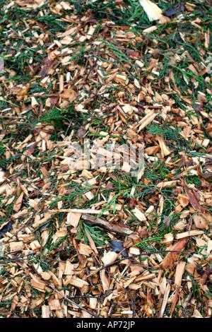 Abgebrochenen Baum beschneiden werden zum Mulchen unter etablierten Sträucher und krautige Pflanzen verwendet - Stockfoto