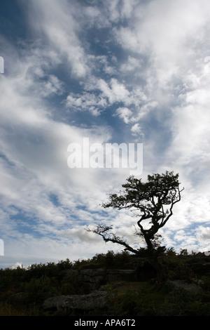Silhouette-Baum im Dartmoor National Park vor einem bewölkten Himmel. Devon, England - Stockfoto