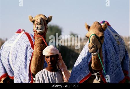 Trainer mit Renn-Kamele im Stall Dubai Vereinigte Arabische Emirate - Stockfoto