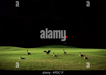 Sport Golf Course Golfplatz - Stockfoto