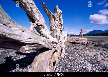 Großen Baumstamm Treibholz und Wurzel an Land gespült an einem Strand der Westküste auf Vancouver Island in British - Stockfoto