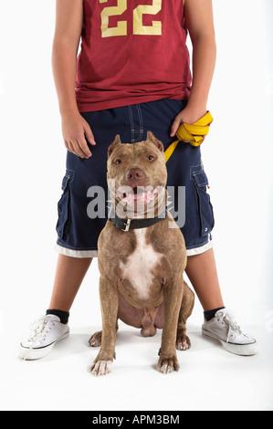 Teenager mit Pitbull Hund - Stockfoto