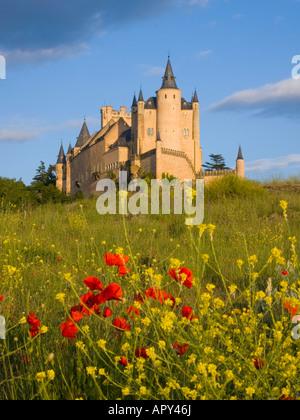 Segovia, Kastilien und León, Spanien. Blick auf den Alcázar aus Feld, wilde Blumen im Vordergrund. - Stockfoto