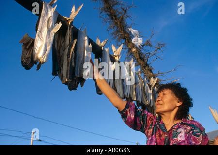 Einheimische Frau Überprüfung Weißfisch Noorvik Alaska - Stockfoto