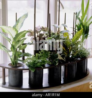 pflanzen auf der fensterbank stockfoto bild 310629504 alamy. Black Bedroom Furniture Sets. Home Design Ideas