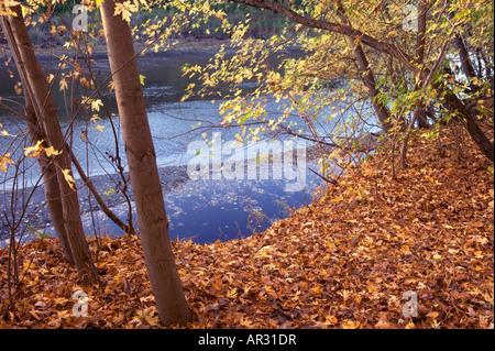 Silber Ahornbäume und Big Sioux River, Silver Maple primitiven Bereich, Iowa USA - Stockfoto