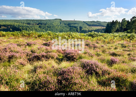 North York Moors Heather auf Great Ayton Moor mit Captain Cook Monument und Easby Moor in der Ferne. - Stockfoto