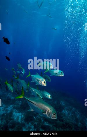 Schule-Buchsen unter Boot G-Punkt Divesite Französisch Cay Turks Caicos Islands - Stockfoto