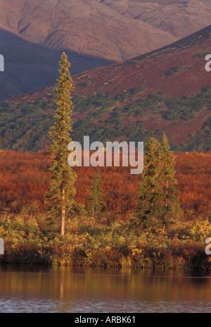 Taiga in Herbstfarben breiten Pass Alaska Range Alaska USA - Stockfoto