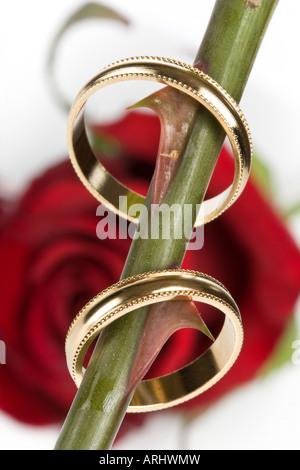 Hochzeit Ringe hängen die Dornen einer Rose als Symbol für die Schwierigkeiten in einer Ehe - Stockfoto