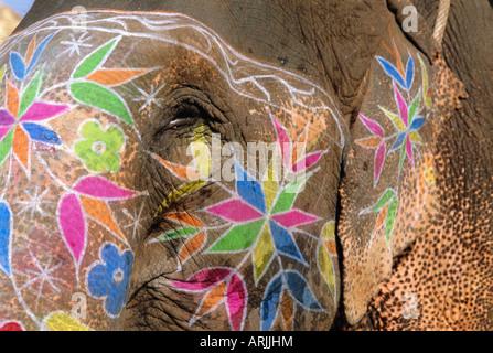Elefant, Jaipur, Rajasthan, Indien, Asien dekoriert - Stockfoto