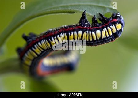 Caterpillar - Stockfoto