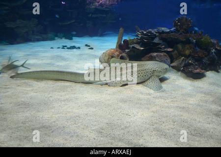 Hai auf dem Sand im Meer - Stockfoto