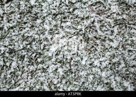Kurzen Rasen Wiese ist teilweise mit großen weißen Schneeflocken bedeckt. - Stockfoto