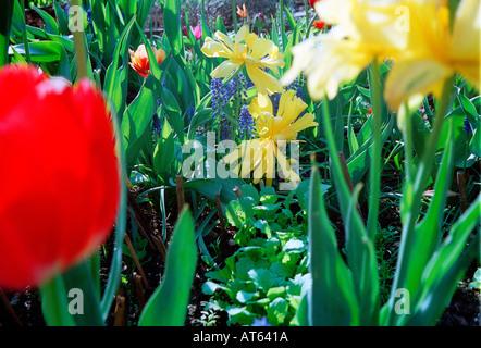 Blumen wachsen in einem Gemeinschaftsgarten - Stockfoto