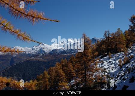Lärchen im Herbst Wyellow Nadeln, erste Schnee der Saison Mtns. Fletschorn und Lagginhorn Valais oder Wallis Alpen - Stockfoto