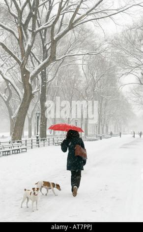 Frau, die ihre Hunde während eines Schneesturms in Central Park New York - Stockfoto